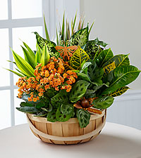 Garden Plant Basket Assorted Plants in a basket with a blooming Kalanchoe