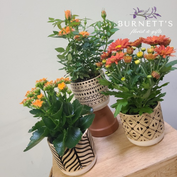 Fall Geometric  Flowering Plant