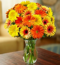 Fall Gerbera Daisies Arrangement