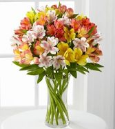 COLORFUL LILIES  IN  MIXED SHADES OF BRIGHT