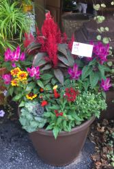 Fall Mix Planter