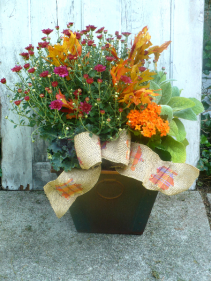 Fall Mum Mix Planter   $68.00  Choose Butterscotch, Burgundy or Rust Mum