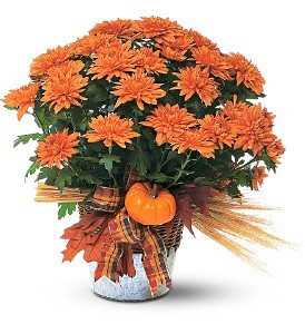 Fall Mum Plant Fall Plant in Whitesboro, NY | KOWALSKI FLOWERS INC.