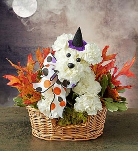 Fall Party Pooch In Basket of Autumn Leaves