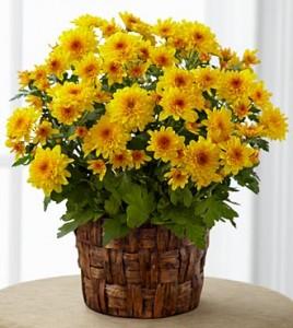 Fall plant 2