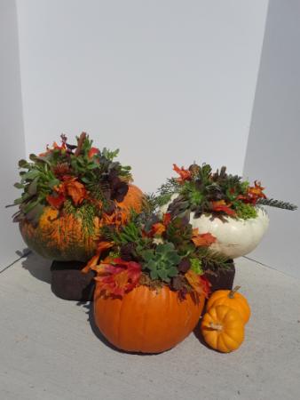 Fall Pumpcullents