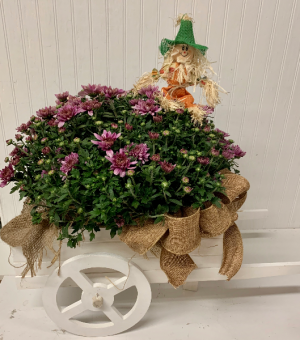 Fall Wagon Mum Plant  in Easton, MD | ROBINS NEST FLORAL AND GARDEN CENTER