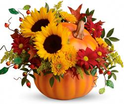 fall5 Fall Flowers