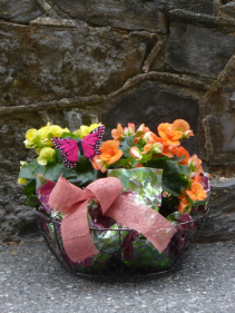Farmhouse Begonia Basket Begonias with Butterfly $40.00