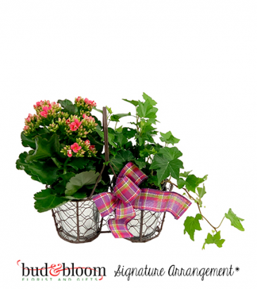 Farmhouse Blooms Bud & Bloom Signature Arrangement