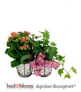 Farmhouse Blooms Bud & Bloom Signature Arrangement
