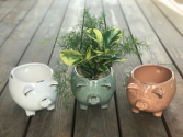 Farmhouse Pig Planter