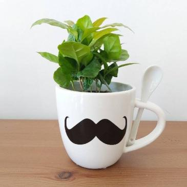 Coffee Plant for Him Planter