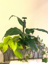 faucet planter Plant