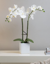 Faux Double stem White Potted Orchid Silk Flowers