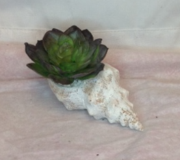 Faux Seashell Succulent silk