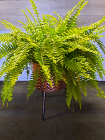 Fern and Plant Stand