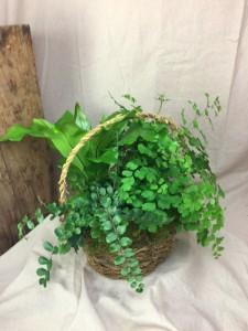 Fern Basket Plant Garden