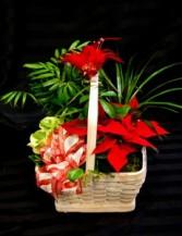 Festive Dish Garden Plants