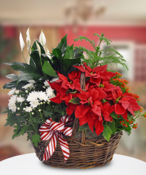 Festive Plant Basket   in Oakville, ON | ANN'S FLOWER BOUTIQUE-Wedding & Event Florist