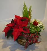 FESTIVE PLANT BASKET Holiday Planter