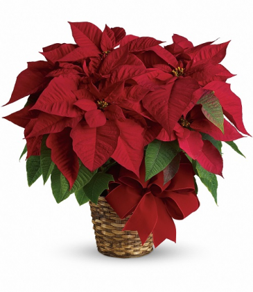 Festive Red Poinsettia T122-1A