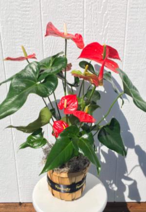 Fff  in Whittier, CA | Rosemantico Flowers