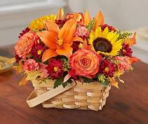 Fields of Europe™ for Fall Basket Arrangement