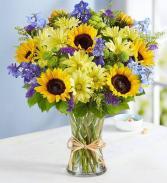 Fields of Europe for Summer MIX GARDEN FLOWERS