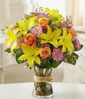 Fields of Europe  Bright & Cheerful Flowers