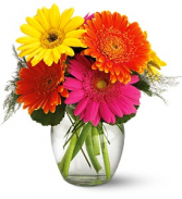 Fiesta Gerbera Bouquet Vase Arrangment