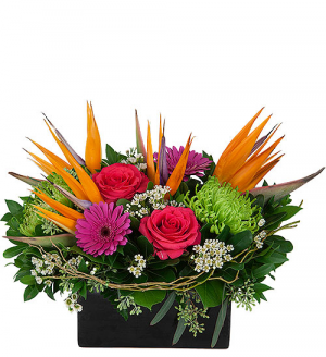 Fireworks arrangement in Winnipeg, MB | CHARLESWOOD FLORISTS