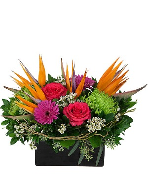 Fireworks Arrangement in Winnipeg, MB | Ann's Flowers & Gifts
