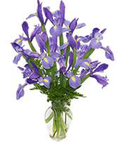FLEUR-DE-LIS Iris Vase in Calgary, Alberta | Posh Flowers Ltd