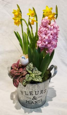 Fleurs & Plants Spring Bulb Planter