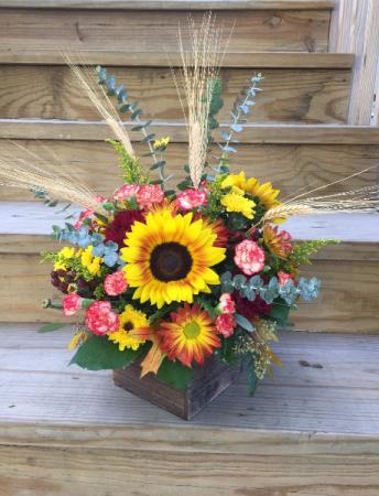 Sunny Harvest