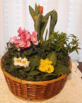 Floral Dish Garden
