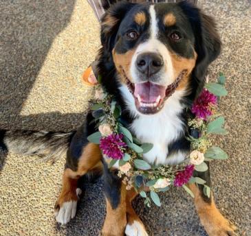 Floral dog collar Arrangement