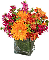 Floral Exuberance Arrangement in Thorp, Wisconsin | Aroma Florist