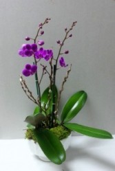 Floral Infusion Potted