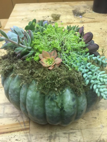 Floral Workshop - October 25th in Gilroy Fall Pumpkin Arrangement with Succulents