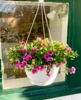 Florist Choice Flowering Basket Hanging Basket