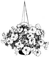 Florist Choice Hanging Basket Hanging Basket