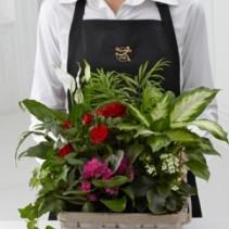 Florist Designed Blooming Plants plant