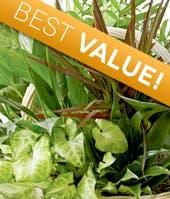 Florist Designed Dish Garden - 990 Plant