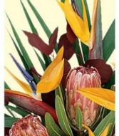 Florist Designed Exotic/ Tropical Flowers in a Vase