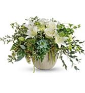 Flourishing Beauty   TEV56-1