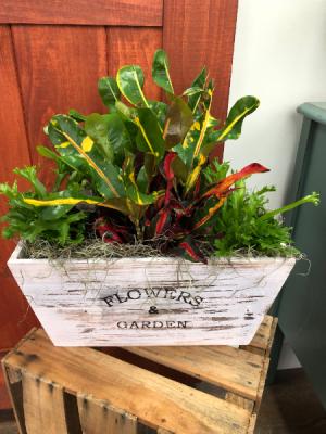 Flower Box Chic! Plant Arrangement in Lexington, NC | RAE'S NORTH POINT FLORIST INC.