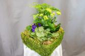 Flower Dish Garden All Occasion