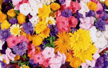 FLOWER SUBSCRIPTIONS FOR 3, 6, 12 MONTHS